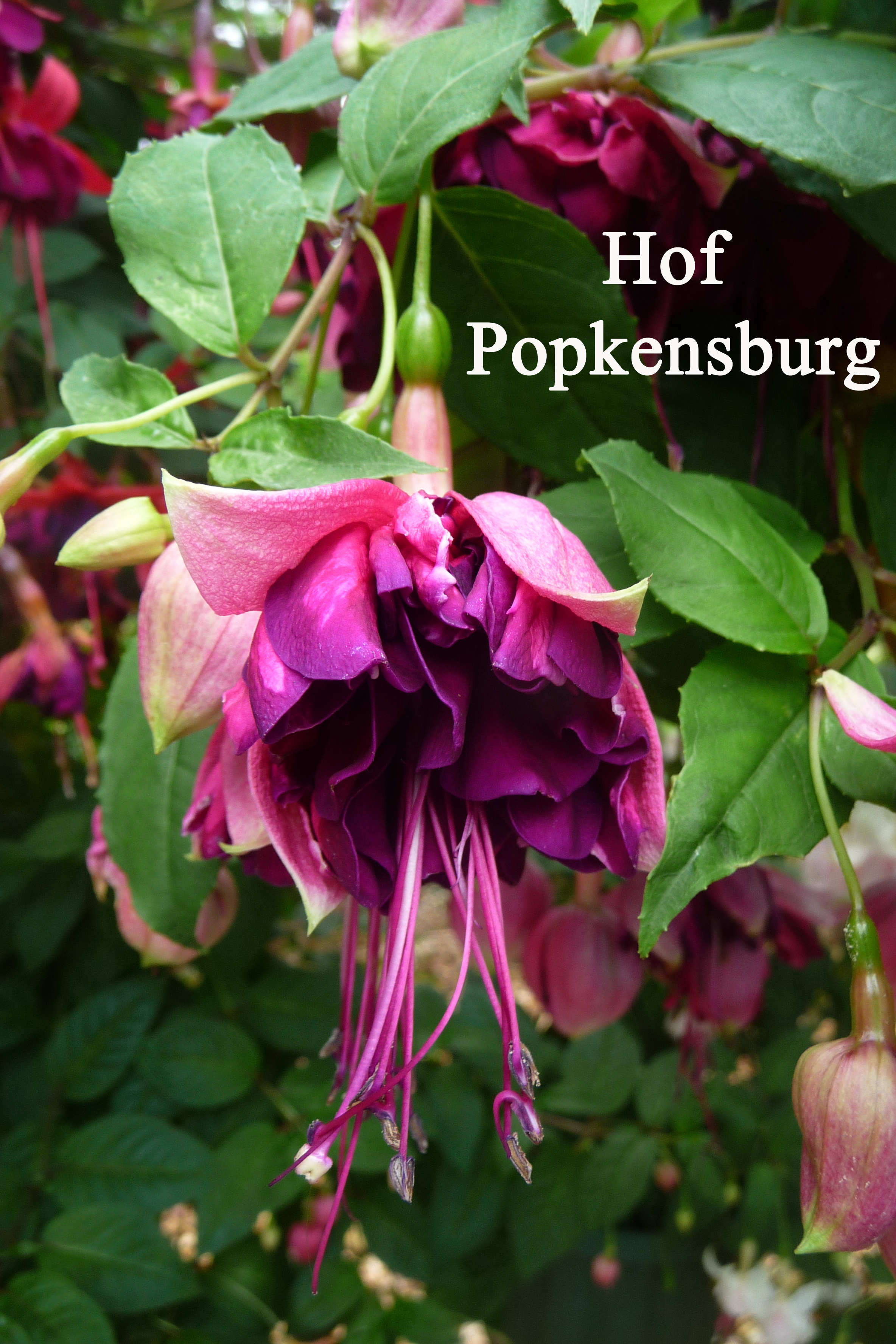 Hof Popkensburg